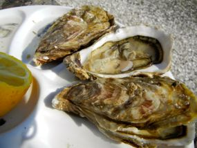 Oysters, Cancale, Brittany, France