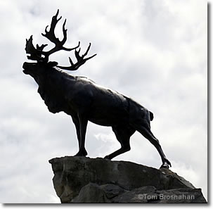 Nefoundland Stag, Beaumont-Hamel Canadian War Memorial, Thiepval, France