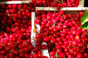 Organic cherries, Raspail Market, Paris
