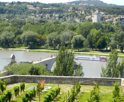 Vines and the Pont d'Avignon, France