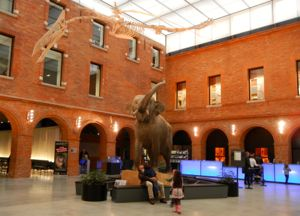 Natural History Museum, Toulouse, France